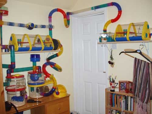 Lets get a hamster as well with a crazy tube cage.