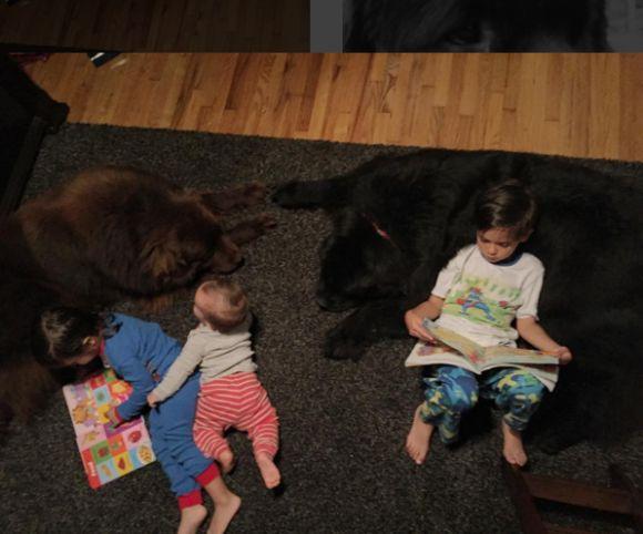 カリフォルニアに住むフィッシャーさん一家は3人の息子たちの他に、超大型犬のニューファンドランドのミックスのラルフィーとボスの2匹を飼っています。  息子3人と超大 …