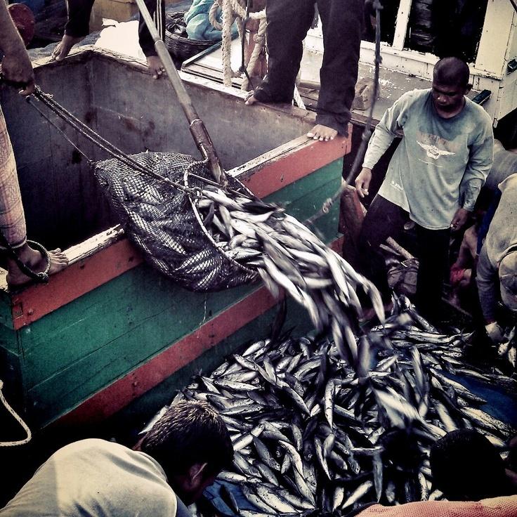 Lampulo fisherman dock. Aceh, indonesia