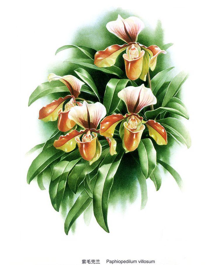 Flores Zeng Xiao Lian