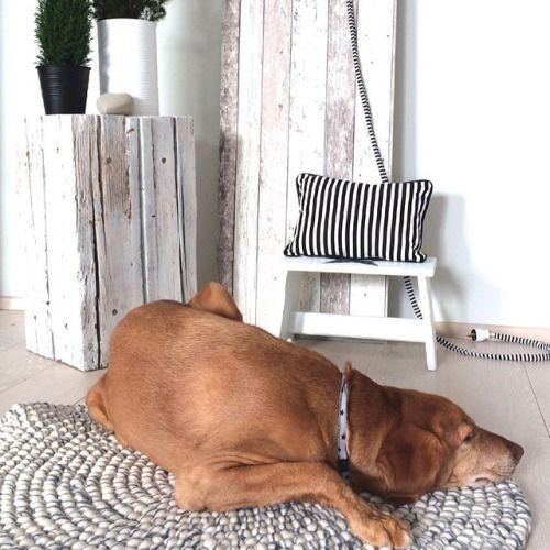 Itse kukin varmaan vielä tähän aikaan voisi jäädä matolleen loikoilemaan  #HuopaPalloMatto #sisustus #tyyli #sisustaminen #matto #design #sisustusideat #sisustusinspiraatio #interior #decoration #interiorinspiration #instahome #instadecor#white #grey #instadogs #dogsofinstagram #valkoinen #harmaa #koira #aamu #makuuhuone