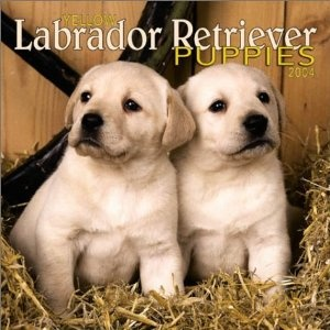 yellow labrador    Like and repin. :)