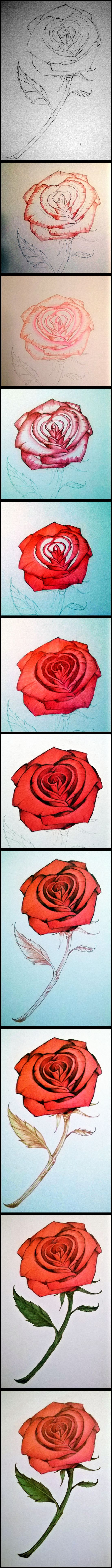 How To Draw A Red Rose With Colored Pencils