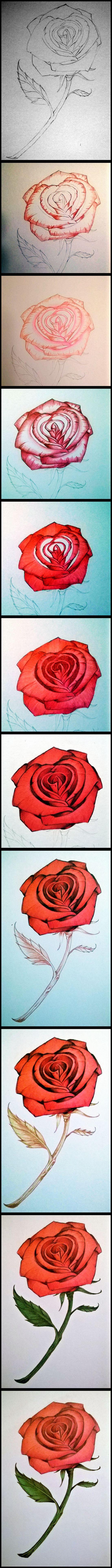colored pencil rose
