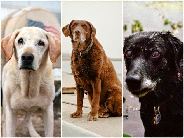On and after September 11, 2001, the Federal Emergency Management Agency (FEMA) deployed close to a hundred search dogs along with their handlers. This is the portrait of last surviving canines.