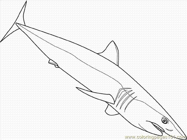 1000 ideas about Shortfin Mako