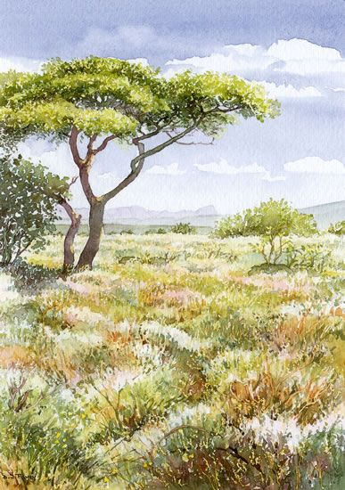 Thorn Tree - watercolour by Dorothy Pavey