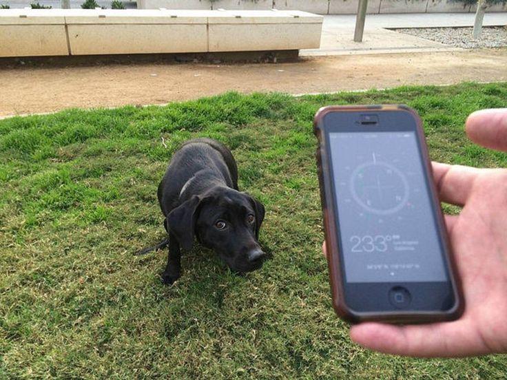 En Japón crean aplicación para denunciar a quienes no recojan heces de sus perros - http://bit.ly/1MCvCUm