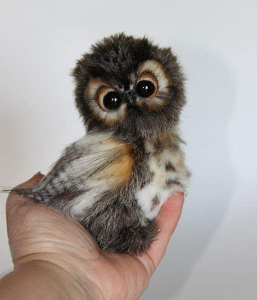 owl named Shu By Averina Olesya - Bear Pile