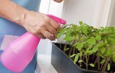 Вредители на рассаде - как распознать и бороться