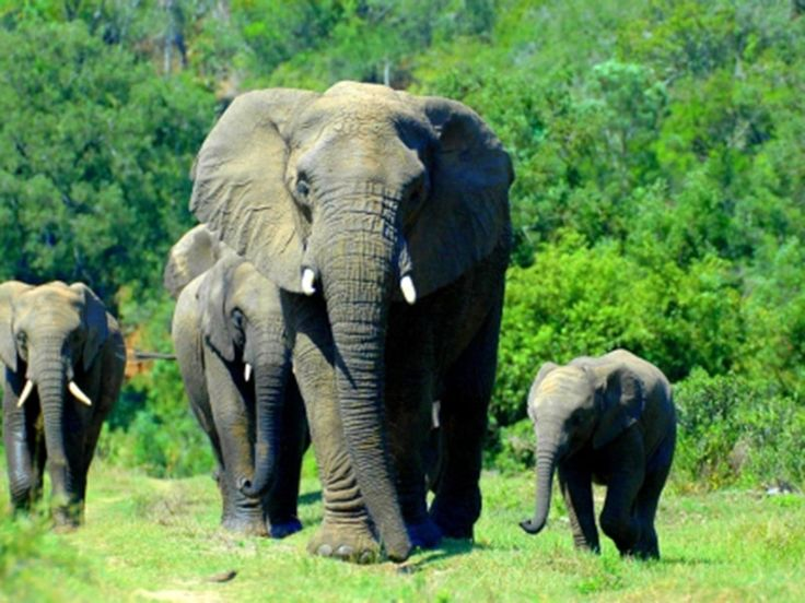 Wildlife Sanctuaries in Jharkhand, India, Forests in Jharkhand
