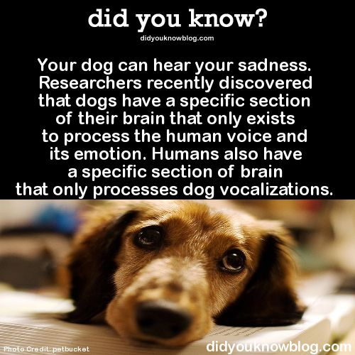 Man's best friend *because that's how they (and we) are hard-wired*, no matter how many masochists profess a preference for cats