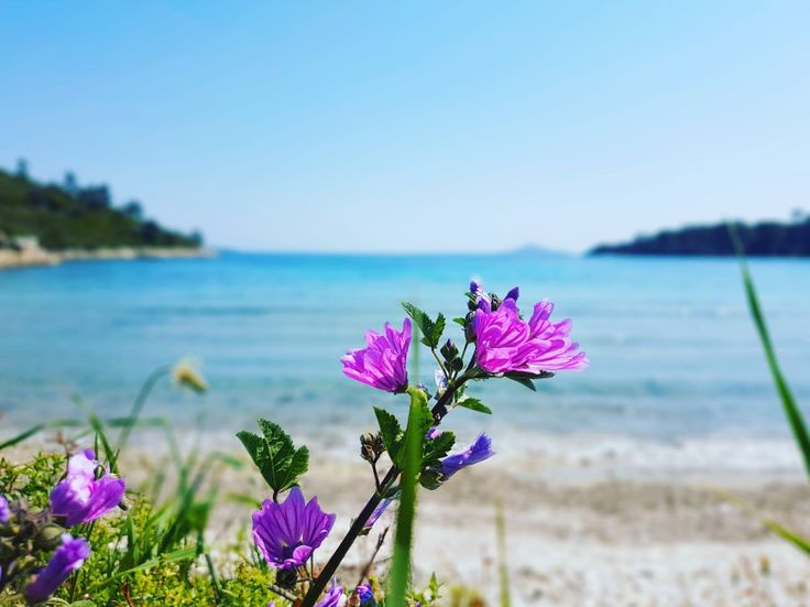 1rst of August...the busiest summer month is here...😱 #tzortzi_yalos_beach #angelos_apartments #alonissos #sporades #greece #summer2017 #august #island #beach #sea #sun