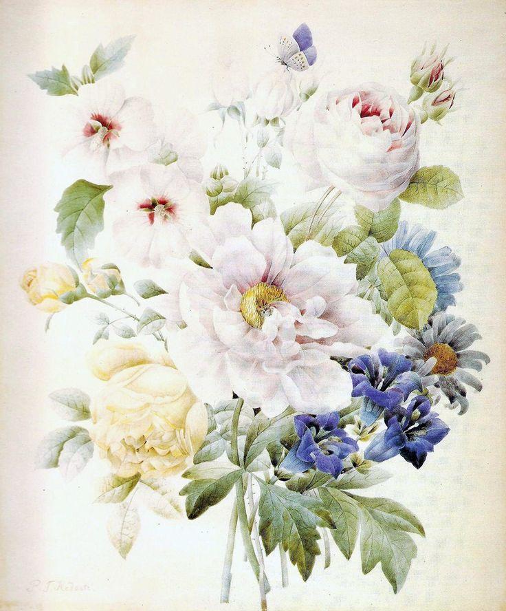 Цветочная литография | Pierre-Joseph Redoute (3). Mастер ботанической иллюстрации Pierre-Joseph Redoute (1759-1840)