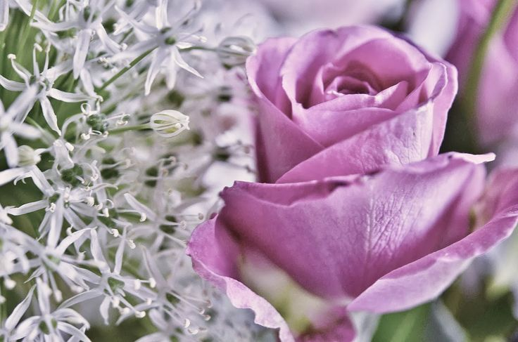 Lovely, delicate rosebud and a post on writing. Read more!
