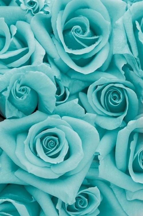 .Couleur triadique : Turquoise ( vert + bleu )