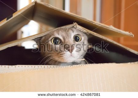 Katze - Kostenlose Bilder auf Pixabay