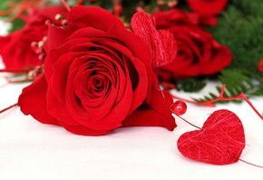 роза, цветы, сердце, любовь, белый фон, бусинка, макро