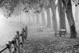 Autumn, Fog, Landscape, Dew, Nature