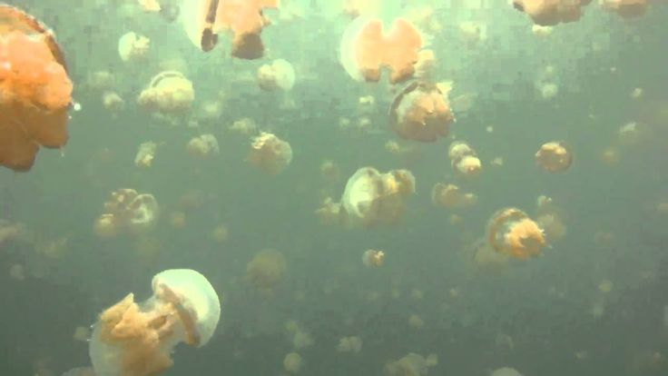 Jellyfish Lake - Kakaban East Kalimantan Indonesia