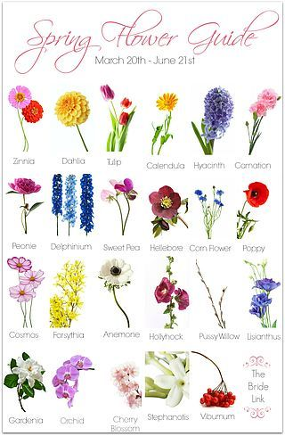 Spring Wedding Flower Guide