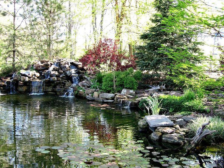 Backyard Waterfalls, Backyard Ponds, Koi Ponds, Backyard Ideas, Outdoor  Fountains, Pond Fountains, Large Backyard, Natural Swimming Pools, Pond  Waterfall