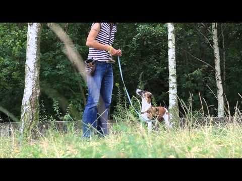 Klettergurt Hund : Besten hundefotografie bilder auf
