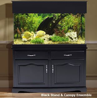 Aquarium Cabinet. Could Repurpose Kitchen Cabinets Into This