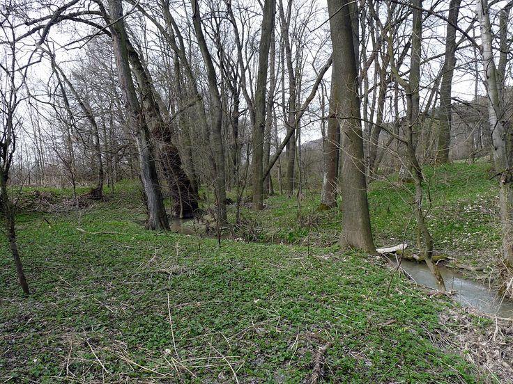 Údolní jasanovo-olšové luhy a tvrdé luhy nížinných řek <i>(Alnion…