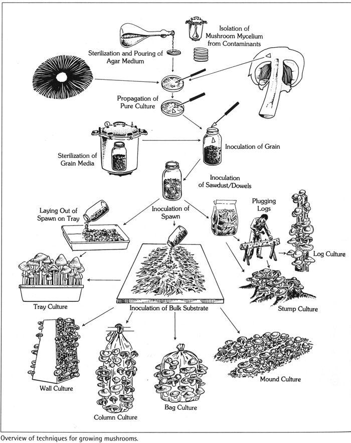 121 best growing mushrooms images on pinterest
