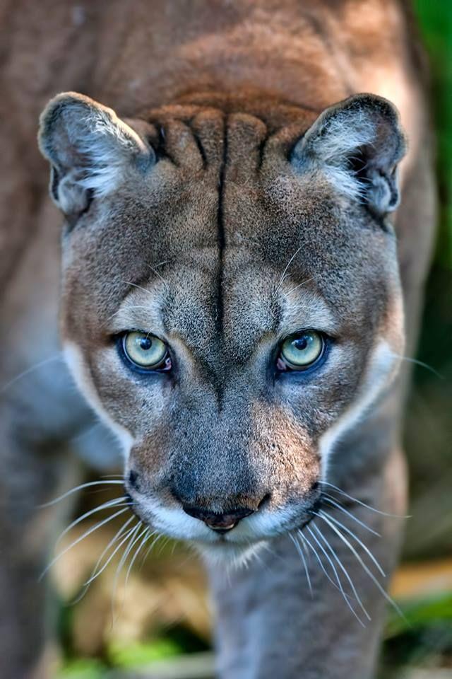 Beautiful Katzen Ausgestopftes Tier Tiere