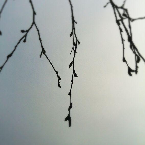 Hullaannu ja hurmaannu: Kaunis sumu