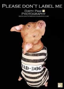 via Dirty Paw Photography- support Pitbull adoption!