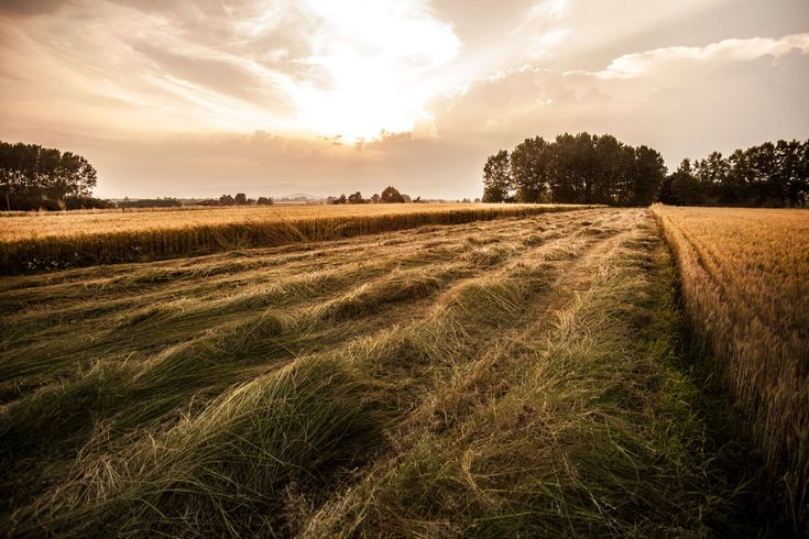 #agriculture #country #field #italy #landscape #nature #rural