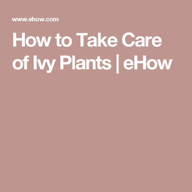 How to Take Care of Ivy Plants | eHow