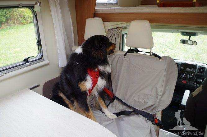 Spezielles Hundegschirr für den Sicherheitsgurt im Auto - oder Wohnmobil.