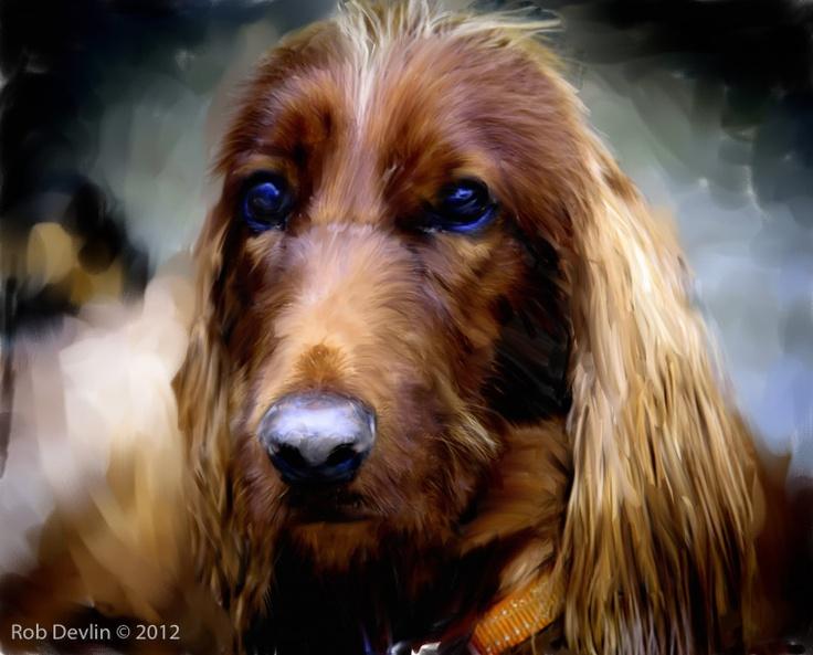 An Irish Setter painted photo.