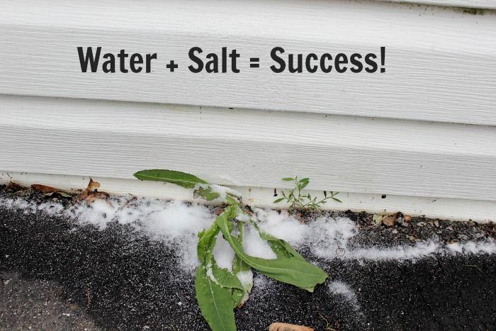 Zout kan een veilige, natuurlijke en effectieve onkruidverdelger als je weet hoe het te gebruiken!