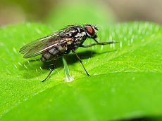 Как быстро и эффективно избавиться от мух в доме?   Wclub.ru