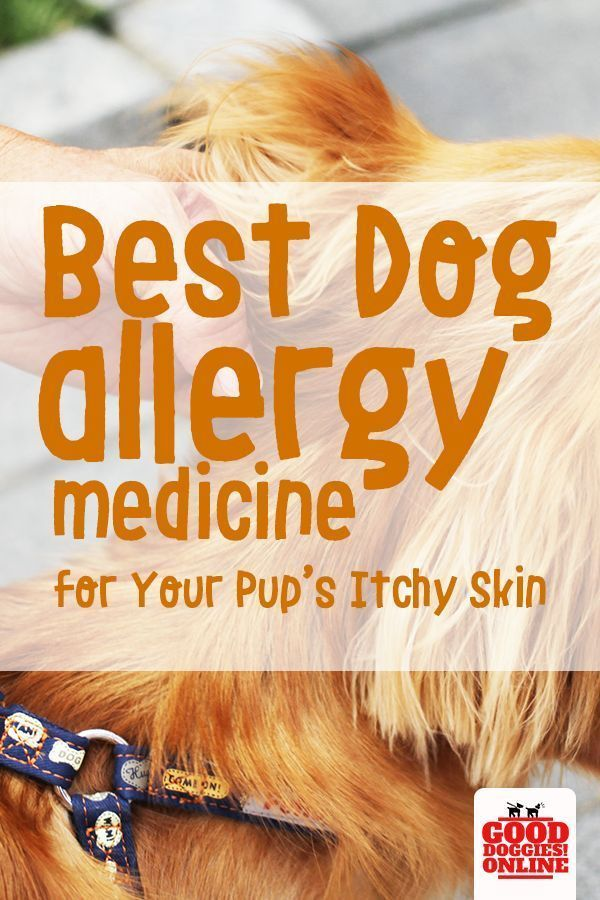 If Your Dog Suffers From Seasonal Allergies You Should Add Some Dog Allergy Medicine To Your Dog Supplies At Hom Dog Allergies Allergy Medicine Itchy Dog Skin