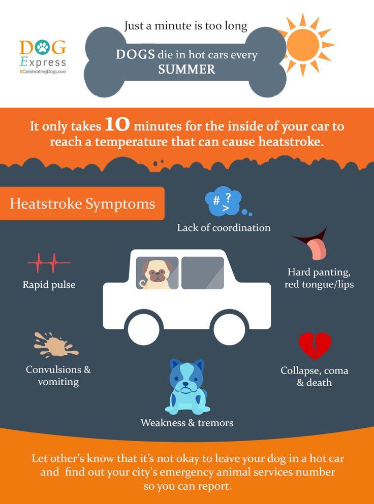 Dogs Die In Hot Cars Every Summer- dogexpress.in  #dogcareinsummer #dogheatstrokesymptoms #doginhotcar