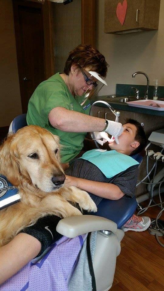 A Cachorra Que Trabalha Como Assistente De Dentista Para Acalmar Pacientes