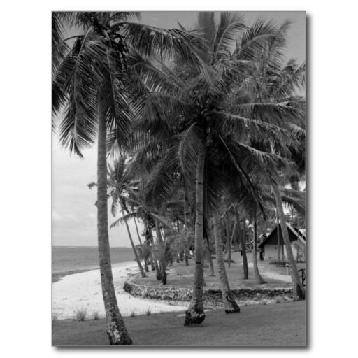 Palms at Tambua Sands Postcard by #vyhphotography #fiji #travel