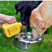 Aloe gel for the dogs :)