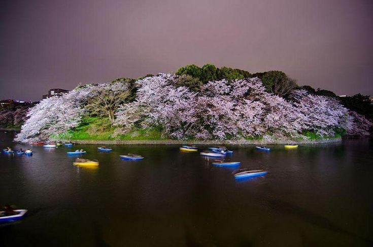 National Geographic: 17 μαγευτικές εικόνες από άνθη κερασιάς στην Ιαπωνία (Photos) | ΤΟ ΠΟΝΤΙΚΙ