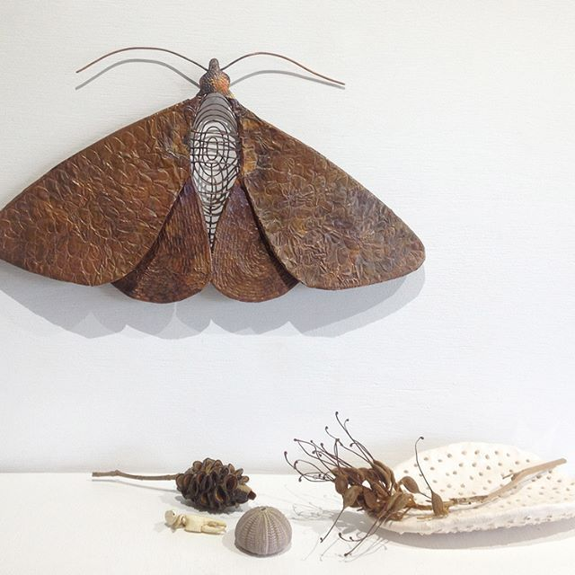 Another of my moth pieces now available @coastalartisans.As always, I try toblend nature + art + sustainability. #reclaimedembossedcopper foil, wire, soldered to form the shape of a #whitebandednoctuidmoth I featured on my feed a couple of months ago.  #moth #mothart #insectart #art #artist #australianartist #australianmade #australianhandmade #sustainabledesign #sustainableart #coppersmith #coppersculpture #nicolejakins #handmade #handcrafted #mothersdaygift #giftideas #sunshinecoastart…