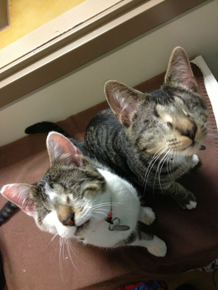 Meet Bacon and Eggs, two eyeless kittens who just got a....