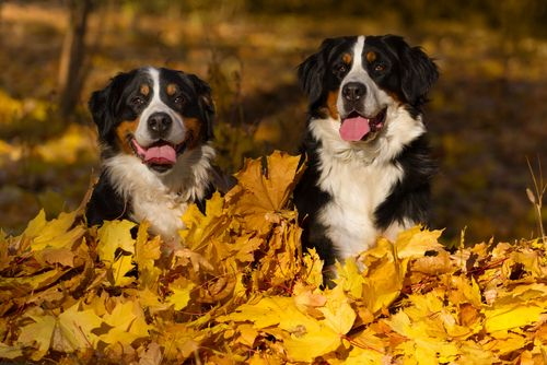 Autumn: Top dangers For Pets