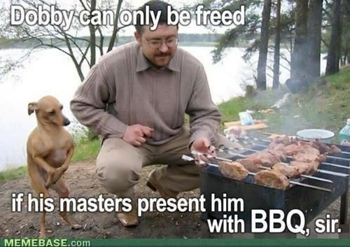 Dobby can only be freed, if his masters present him with BBQ, sir. OMG ITALIAN GREYHOUND ALERT!