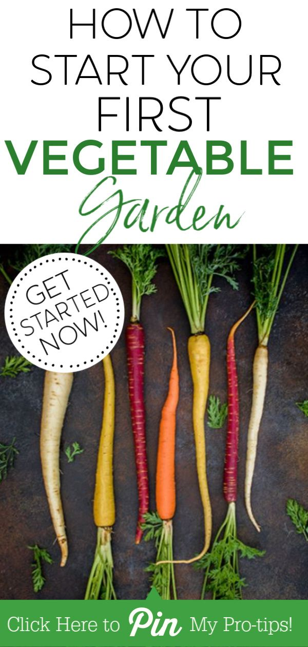How To Start A Vegetable Garden For Absolute Beginners Starting